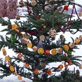 christmas tree with birdseed ornaments and fruit garland