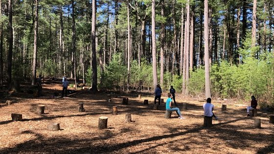outdoor classroom with kids sitting on tree stumps