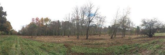 Restored Coburn Meadow