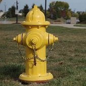 painting fire hydrants
