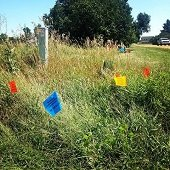 dig safe flags