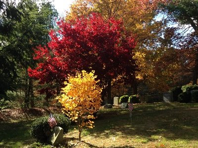 fall in linwood