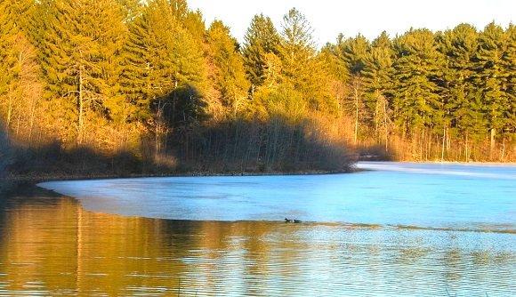 Duck landscape
