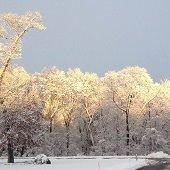 snow in linwood