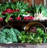 Abundant Fresh Produce at Weston's Land's Sake