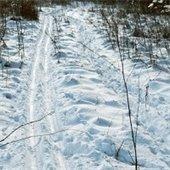 ski tracks on a winter trail