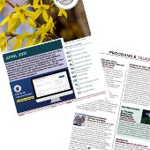 newsletter pages