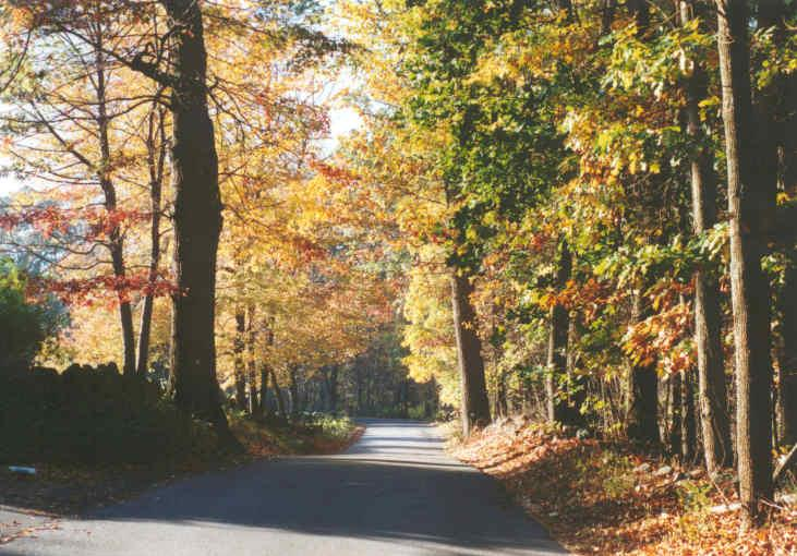 Beautiful Drive Scene with Multicolored Trees