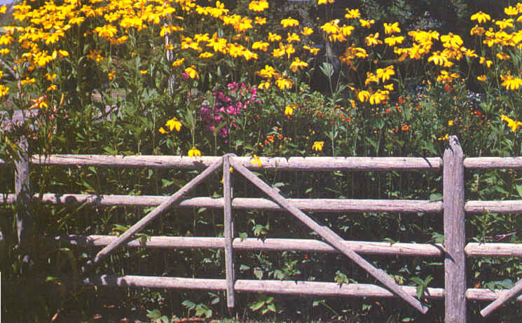 Rustic Wood Fence Among Yellow Flowers