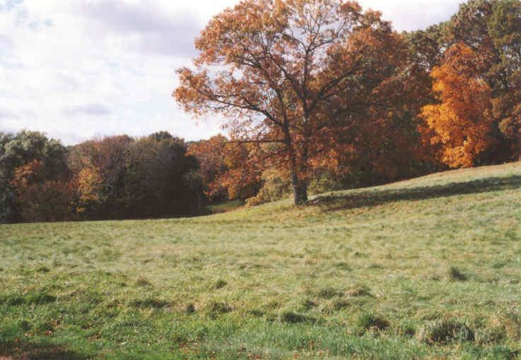 A large tree in a field with vibrant colored trees in the background