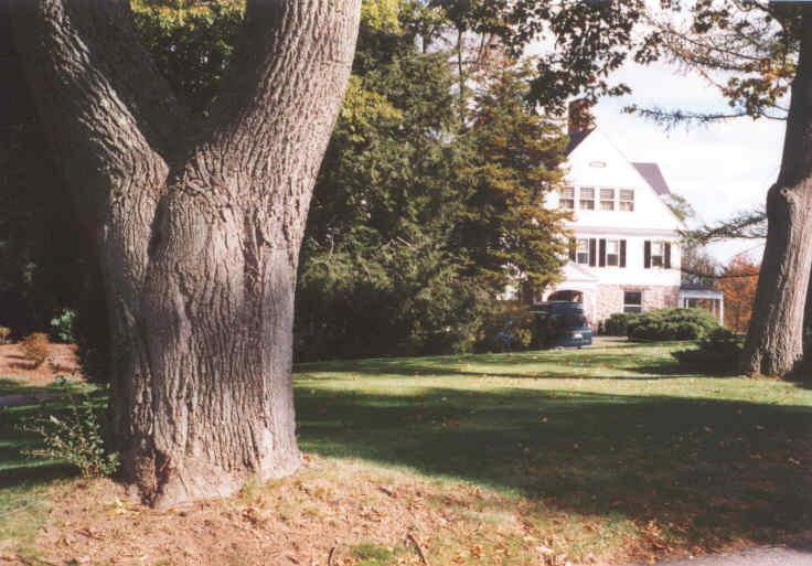 A large tree trunk with a white house in the background