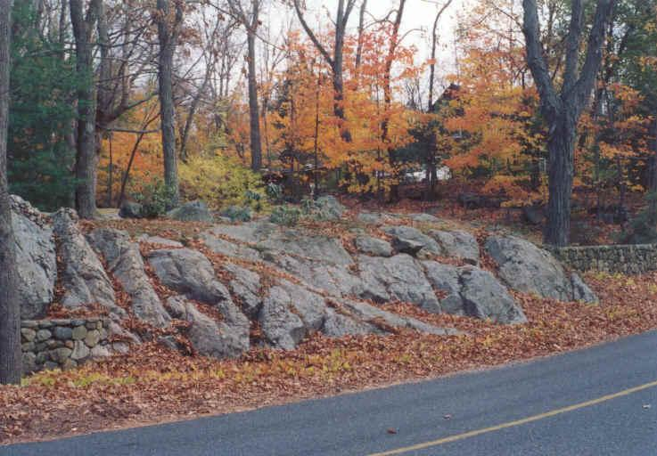 Rock Slope Covered in Leaves